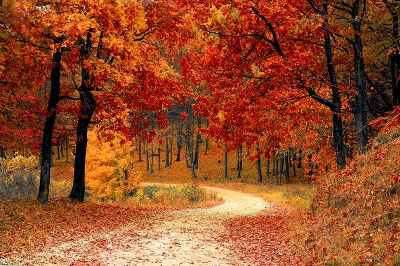 """Képtalálat a következőre: """"október"""""""
